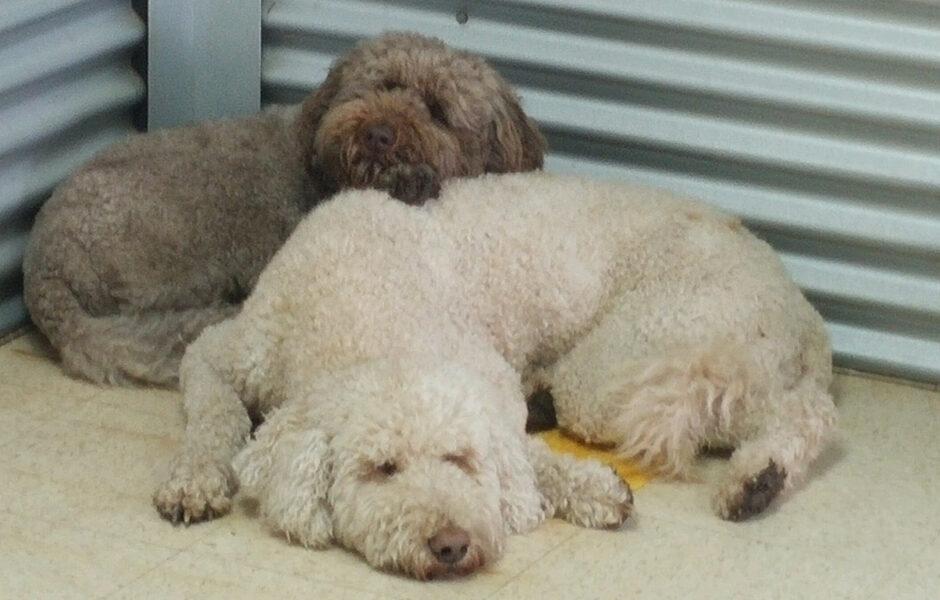 dogs_sleeping